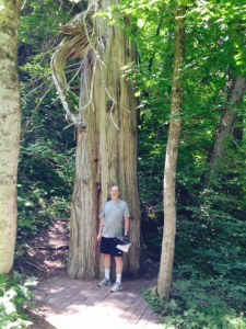 An old-growth cedar tree, part of a beautiful hike through the forest on the island