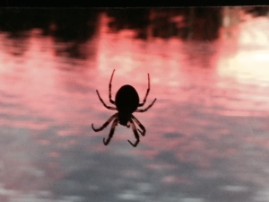 So why did I take a picture of this spider? Well, on evenings that we eat cook aboard, we usually eat on the bridge about the time of sundown. This large spider took up residence at a corner of our canvass top, becoming active spinning his web around dusk.  We watched him with fascination for several nights, discussing his strategy and tactics for catching his dinner.  He's now become a member of our crew, providing entertainment and a topic for conversation at dinner on the bridge. So I thought I'd share him with you (her?)
