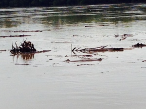 Debris flowing down the Big Muddy after being washed into the rising waters
