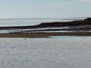 Entering Carrabelle Harbor at low tide -