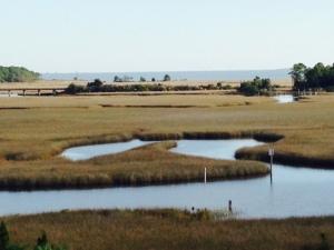 A salt water marsh adjacent to Carrabelle Harbor