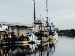 Part of the commercial shrimp and oyster fleet at Port St. Joe