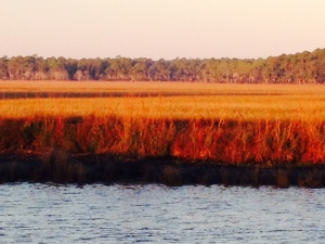 The early morning sun on the grasses of the salt water marsh was spectacular -
