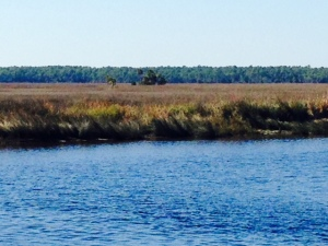 A salt water marsh lined the riverbank for much of the ride up the St. Marks River
