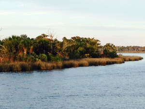 The bank of the Suwannee River, entering the mouth