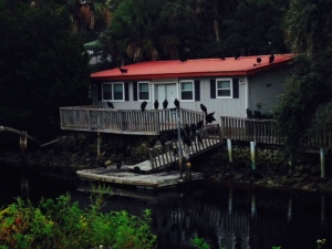 A creek-side house in Suwannee - there were at least 30 enormous turkey vultures roosting on the dock, deck, and roof
