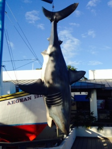 So we went fishing while we were in Tarpon Springs and finally caught The Big One....(OK, just kidding...)