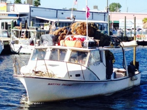 One of the many sponge harvesting boats on its way int the harbor - notice the bundles of sponges tied to the roof.  Sponge boats come in all shapes and sizes