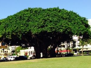 OK, so maybe I'm a bit obsessed with trees.  This is a magnificent one in the waterfront area that I couldn't resist.