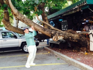 He may be 90, but my Dad can still spring into action to save this tree from collapsing onto the parking lot...
