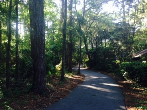 There are miles and miles of wonderful walking/bike paths throughout Hilton Head Island, many of which wind through pine forests while connecting the various destinations throughout the 41 square mile island.