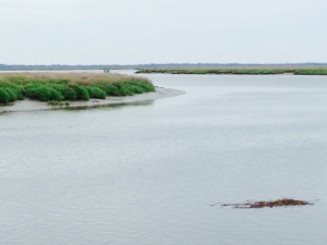 The view of the bayous and the salt water marsh from the marina docks -