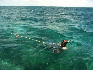 Chris bringing up a Lion Fish which he speared.