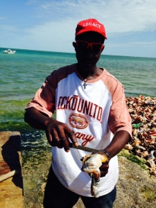 I stopped to talk to this guy while he was removing the conch that he brought in that day from the shells.  He showed me in detail how it is done and how the meat is then separated from the organs.