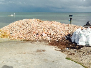 Along the shore of the West End Village are numerous piles of empty conch shells from which the conch have been harvested and the shells discarded.