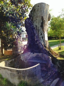 Dating from 1880, more than 20 of these artesian wells/fresh water springs provided water to Oriental residents until the 1960's. The concrete benches were added in the 1920's, providing a place for residents to gather and socialize under this 200 year old willow oak when they came to get water.