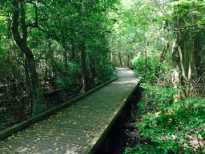 There is a half-mile boardwalk hike into the Dismal Swamp, originating at the Visitors Center