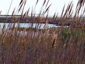 A view from the back side of the beach dunes -